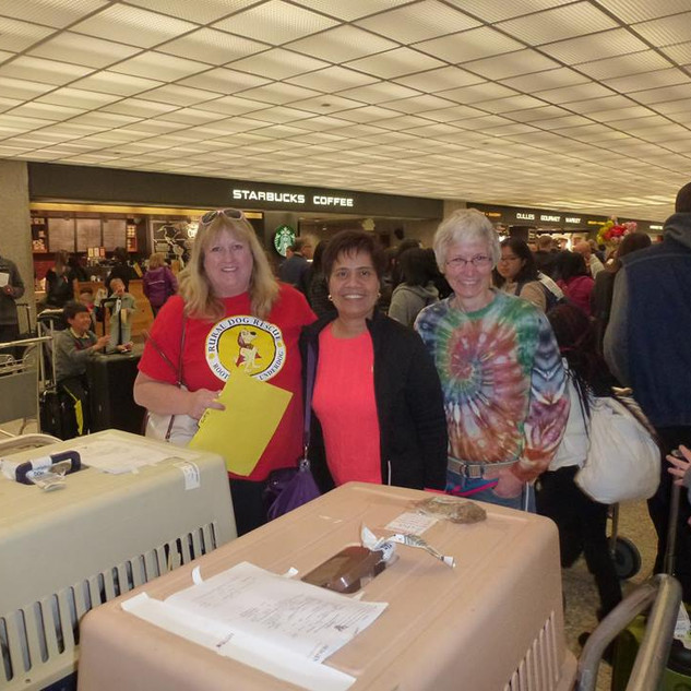 The wonderful Sum arriving from Thailand with Asha and Crystal, both saved from the Dog Meat Trade.