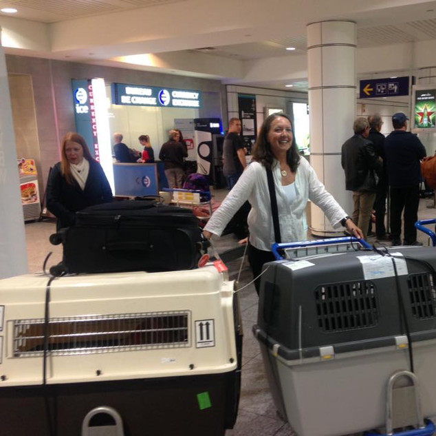 Chantal arriving in Montreal with 5 dogs from Greece.