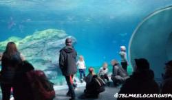 Pacific Seas Aquarium at Pt. Defiance Zoo