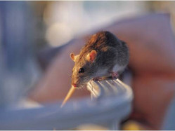 Helpful Hints for Keeping Your Home Pest and Rodent Free