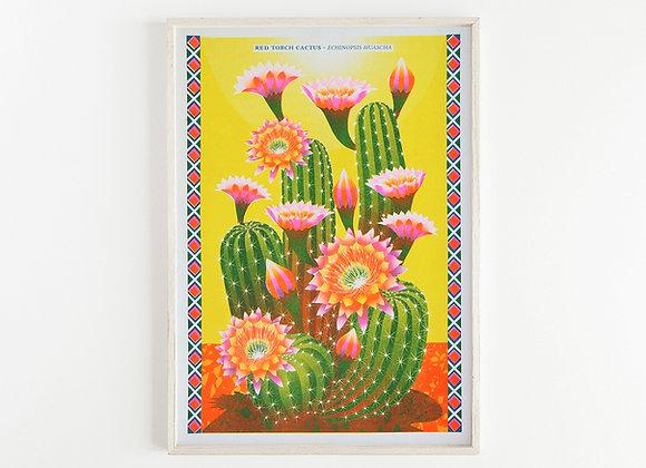 Cactus A3 Risograph Print