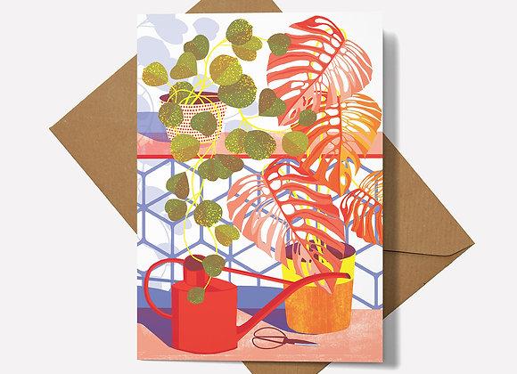 Hoya Card
