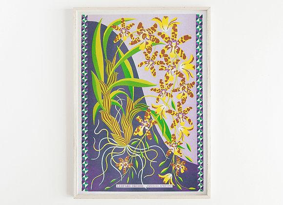 Leopard Orchid A3 Risograph Print