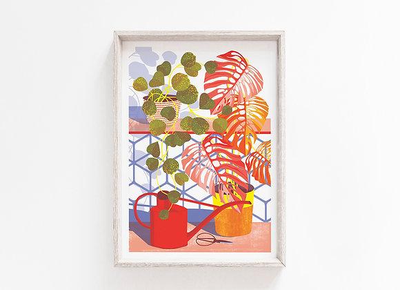 Hoya A4 Art Print