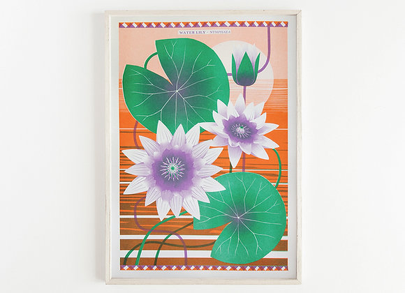 Water Lily A3 Risograph Print
