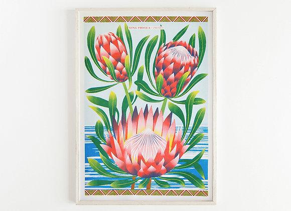 Protea A3 Risograph Print