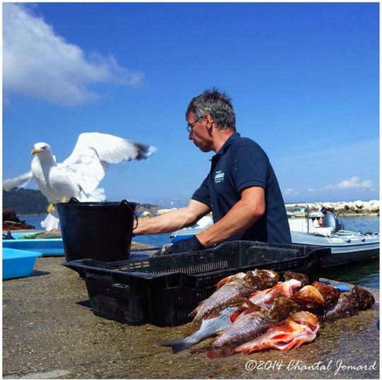 nettoyage des poissons