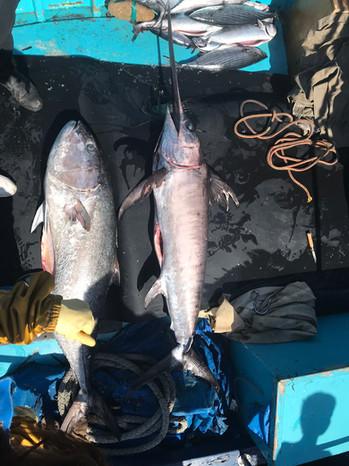 retour de la pêche