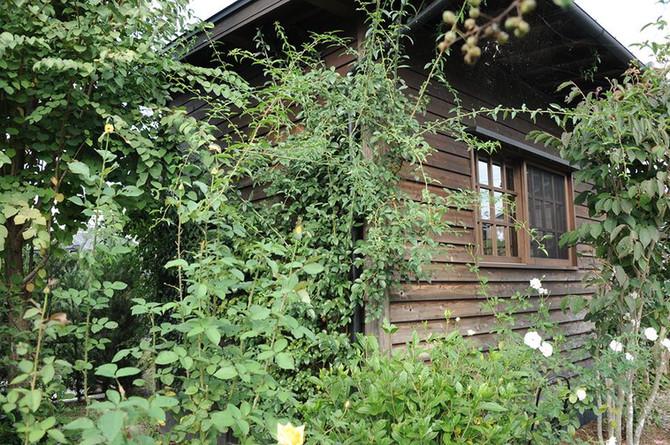 庭に溶け込む家