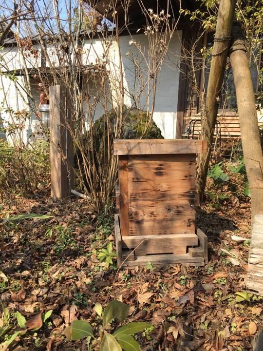 日本みつばちの巣箱