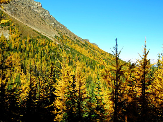 Larch+Valley+21.jpg