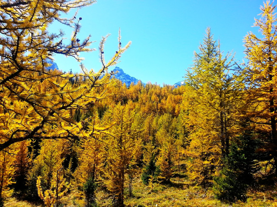 Larch+Valley+02.jpg