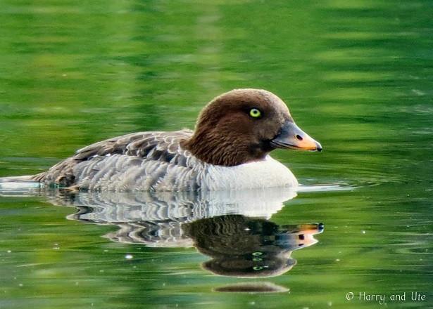 duck.jpg.jpg