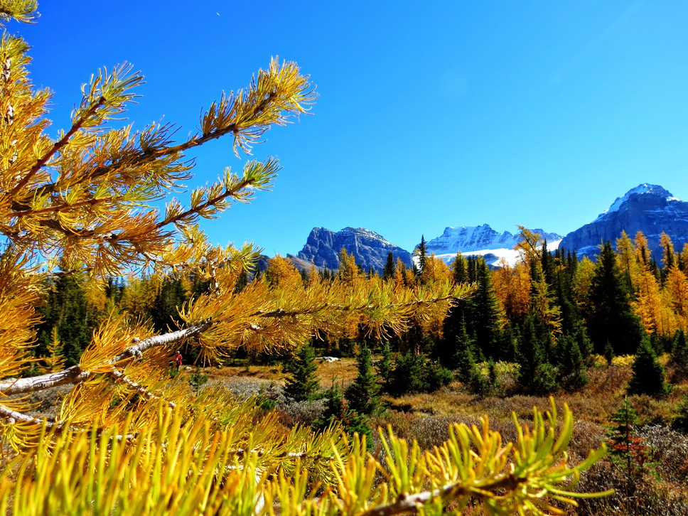 Larch+Valley+15.jpg