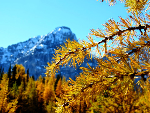 Larch+Valley+23.jpg