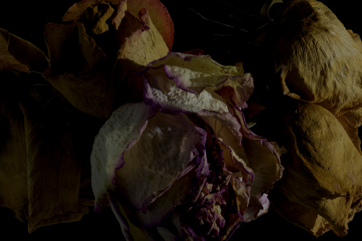 faded flowers 8