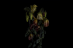 faded flowers 6