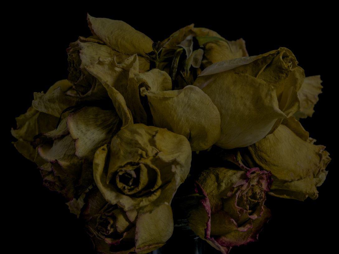 faded flowers 14