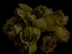 faded flowers 14
