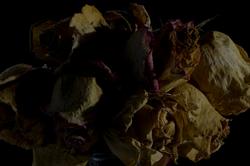 faded flowers 9