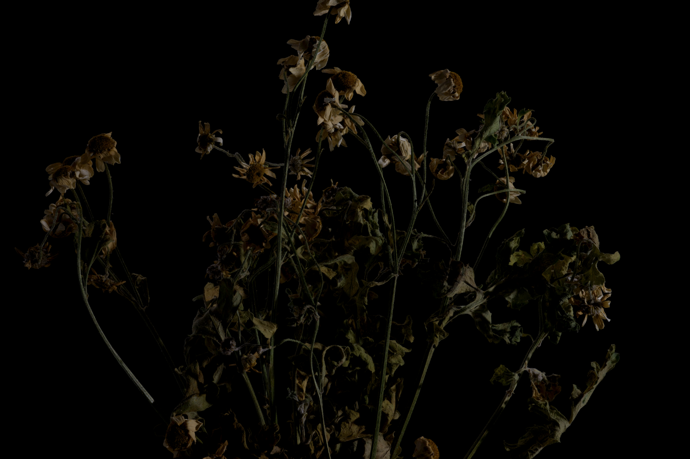 faded flowers 5