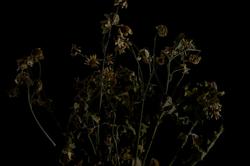 faded flowers 5