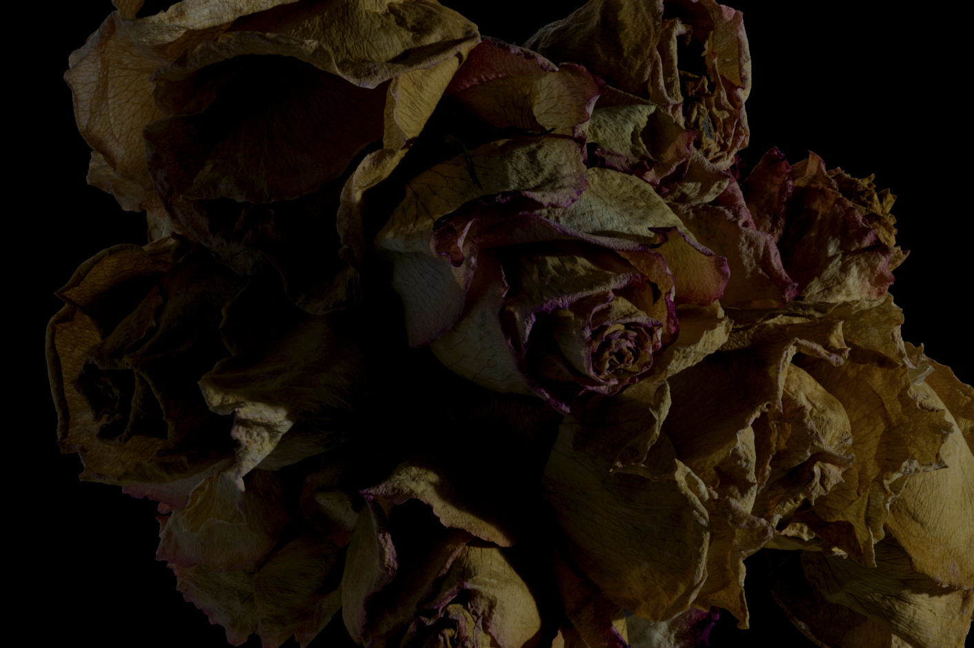 faded flowers 12