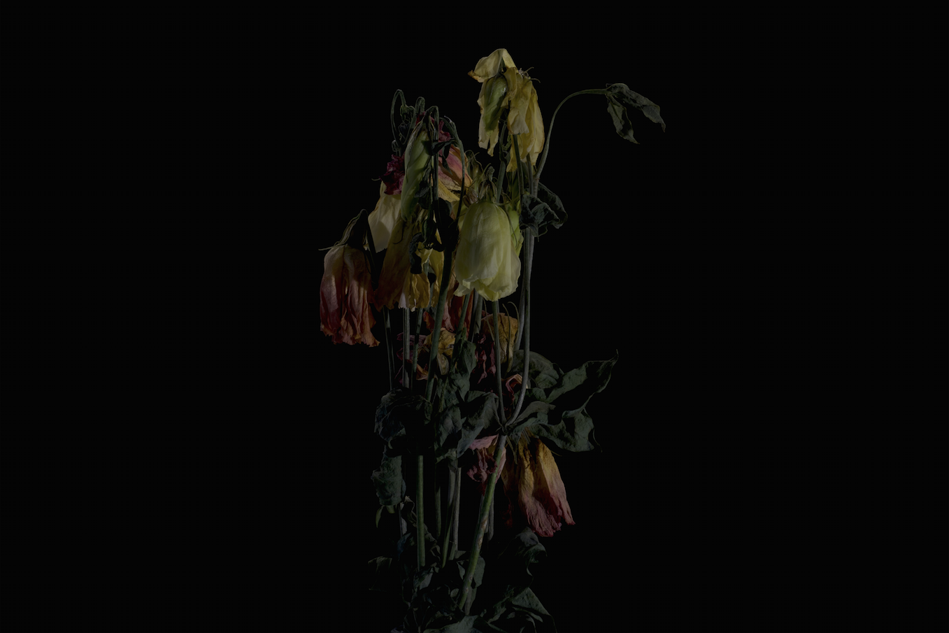 faded flowers 4