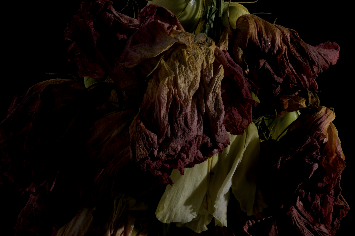 faded flowers 10