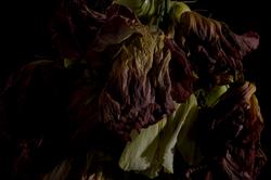 faded flowers 10