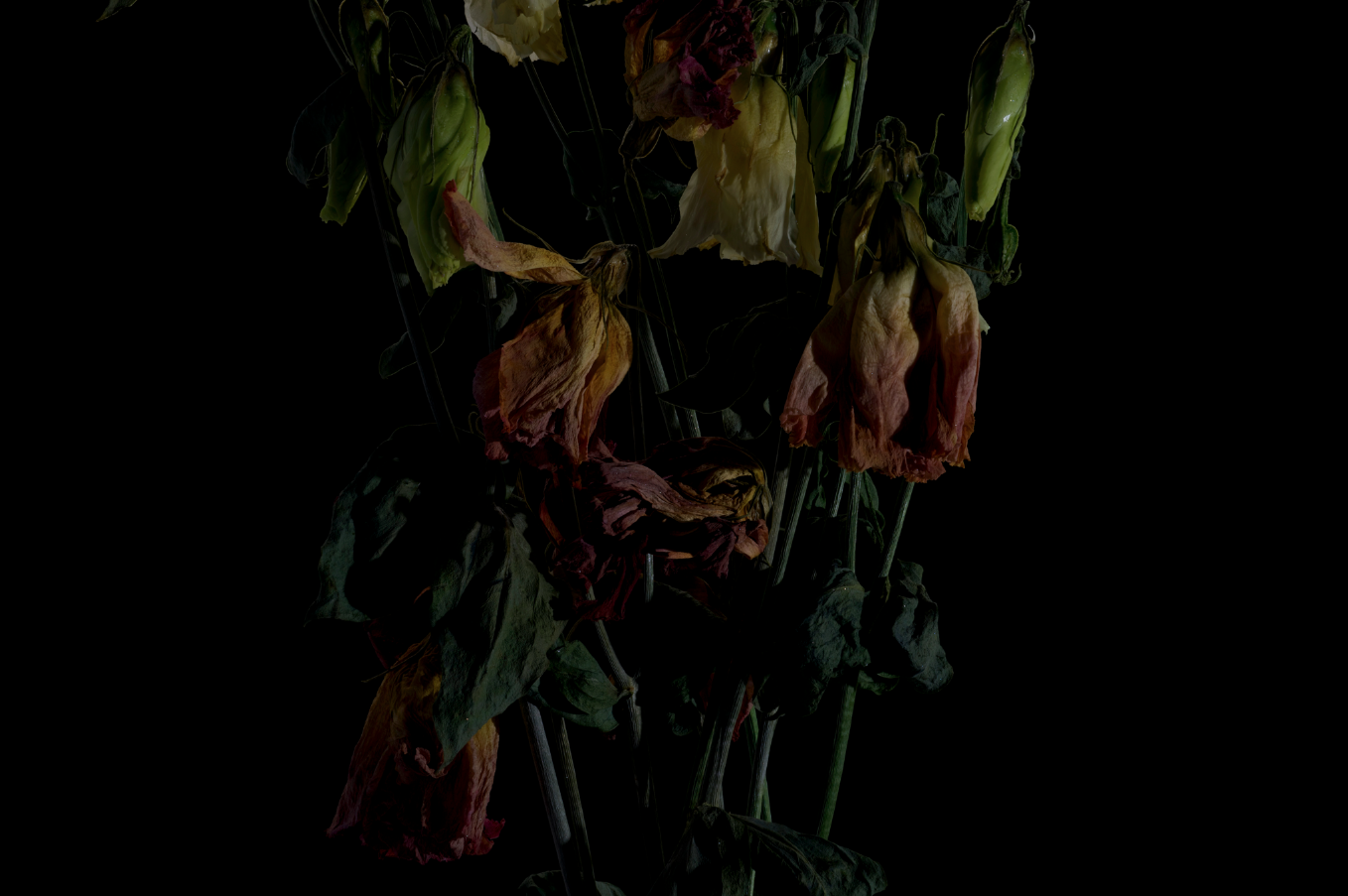 faded flowers 3