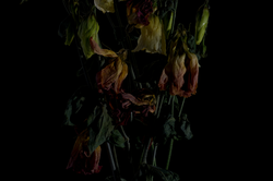 faded flowers 3