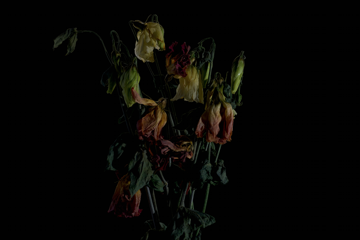 faded flowers 13