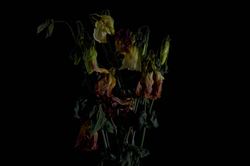 faded flowers 13