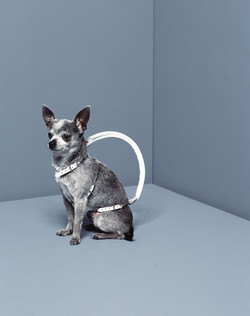 igloo doggy bag / emmanuel pierrot