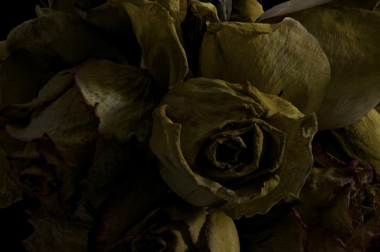 faded flowers 1