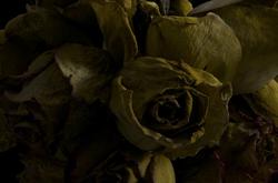 faded flowers 1