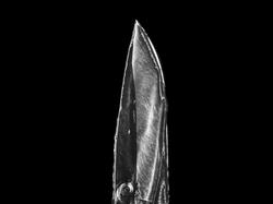 knife 3 buck