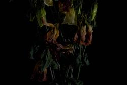 faded flowers 11