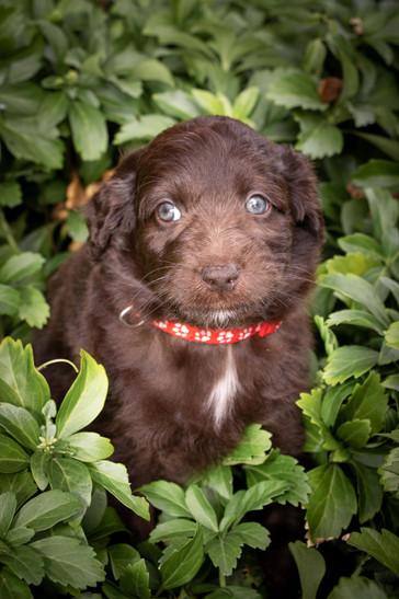07b_Tara_Puppies.JPG