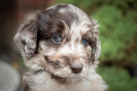 07e_Tara_Puppies.JPG