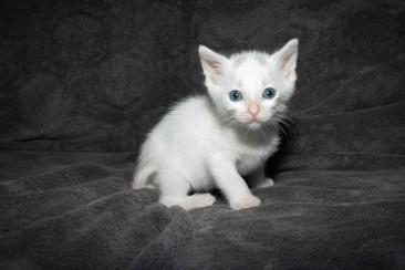04e_Kittens.JPG