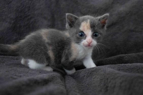 04a_Kittens.JPG