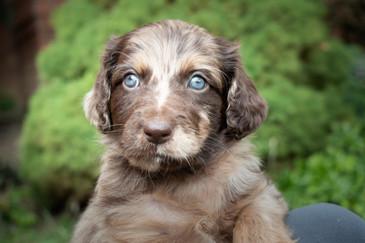 07a_Tara_Puppies.JPG