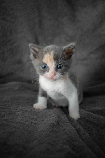 04d_Kittens.JPG
