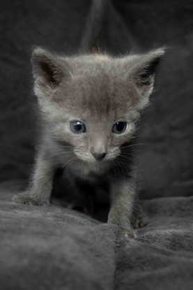 04c_Kittens.JPG