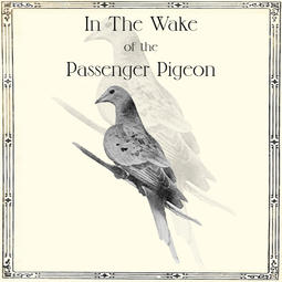 In the Wake of the Passenger Pigeon