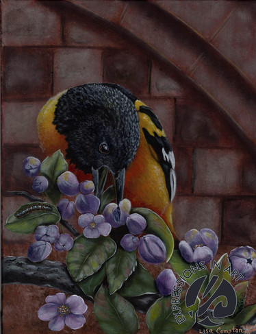 Baltimore Oriole and Apple Blossoms, Lis