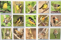 """Collage grid of yellow and brown birds with words """"Interpretive Centre"""" on top"""
