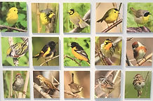 "Collage grid of yellow and brown birds with words ""Interpretive Centre"" on top"
